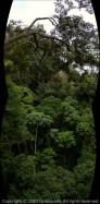 林冠パノラマ